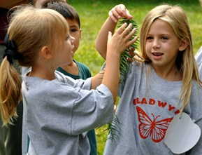 Students playing with an evergreen branch.